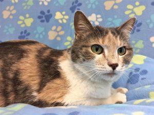 Alice - Female Cat