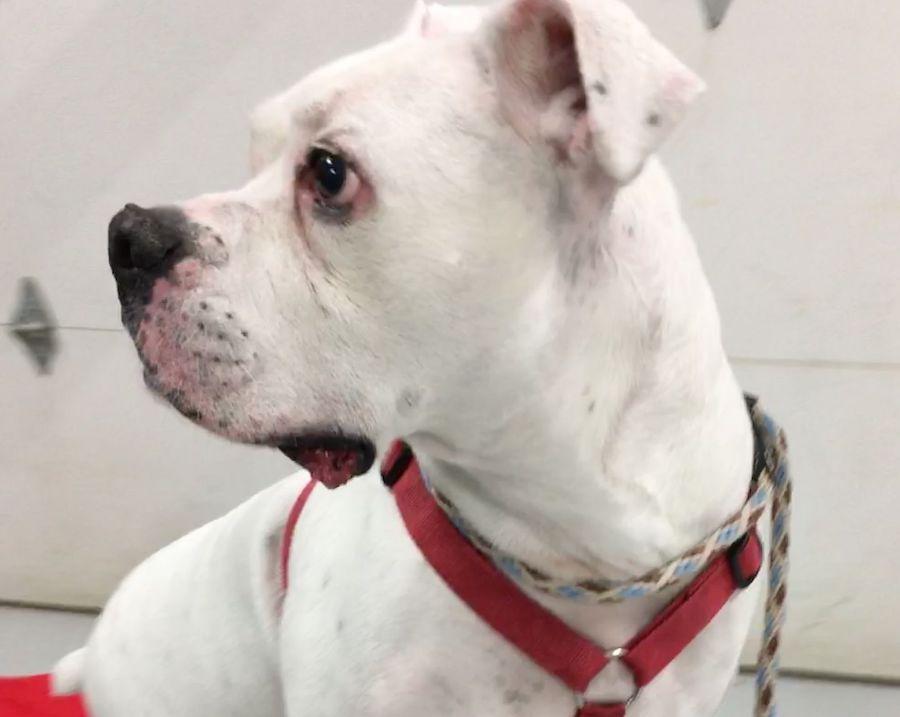 Max face profile