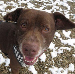 Yoda – Male Dog | Wishbone Pet Rescue