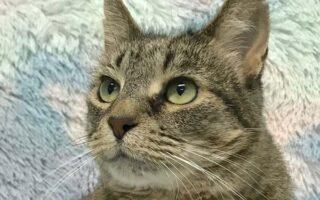 Penny Cat