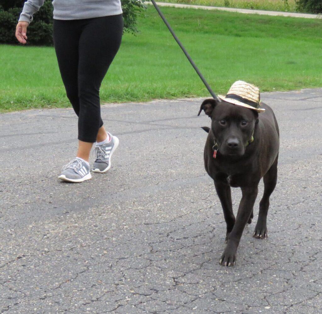 Dog Walk 2020